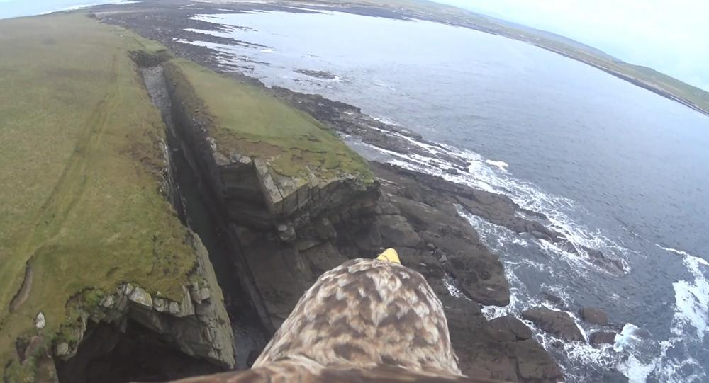 Águia filma voo sobre o arquipélago de Órcades, na Escócia