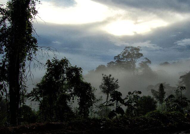 Floresta Amazônica – Pedra Branca do Amapari