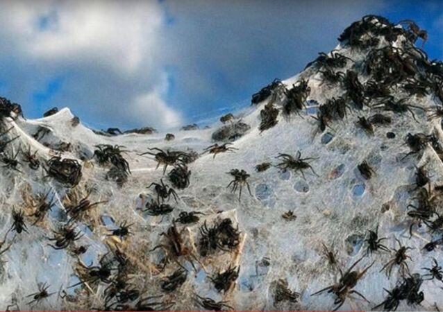Aranhas (imagem de arquivo)