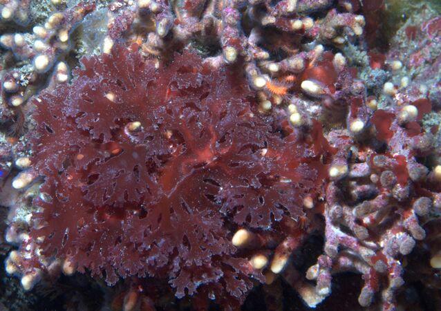 Algas (imagem referencial)