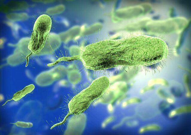 Bactérias em microscópio (imagem referencial)