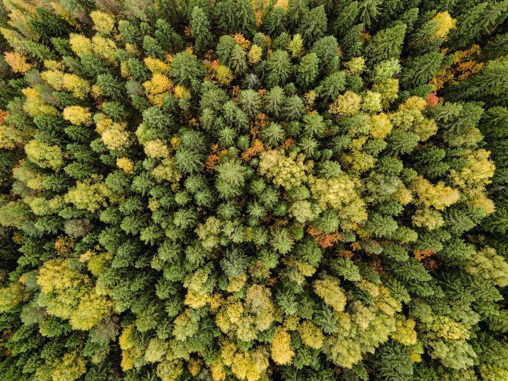 Bosque outonal na região russa de Perm.