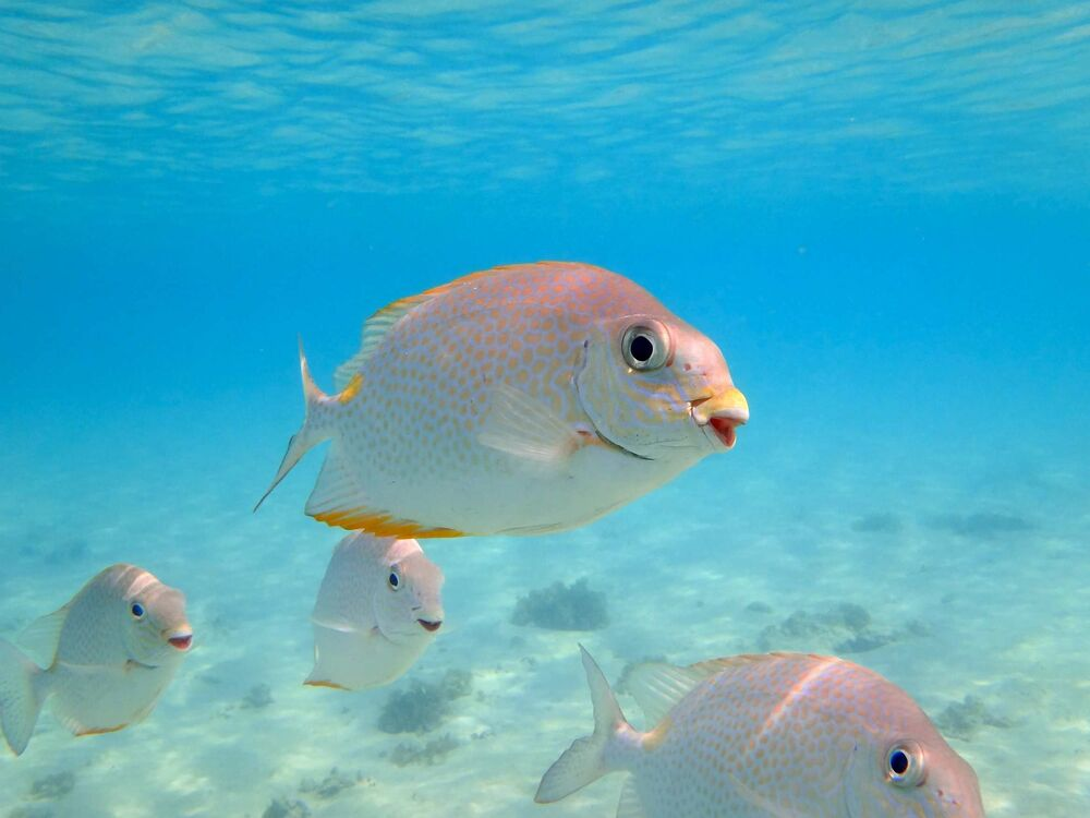 Peixes pousando para foto com um belo sorriso