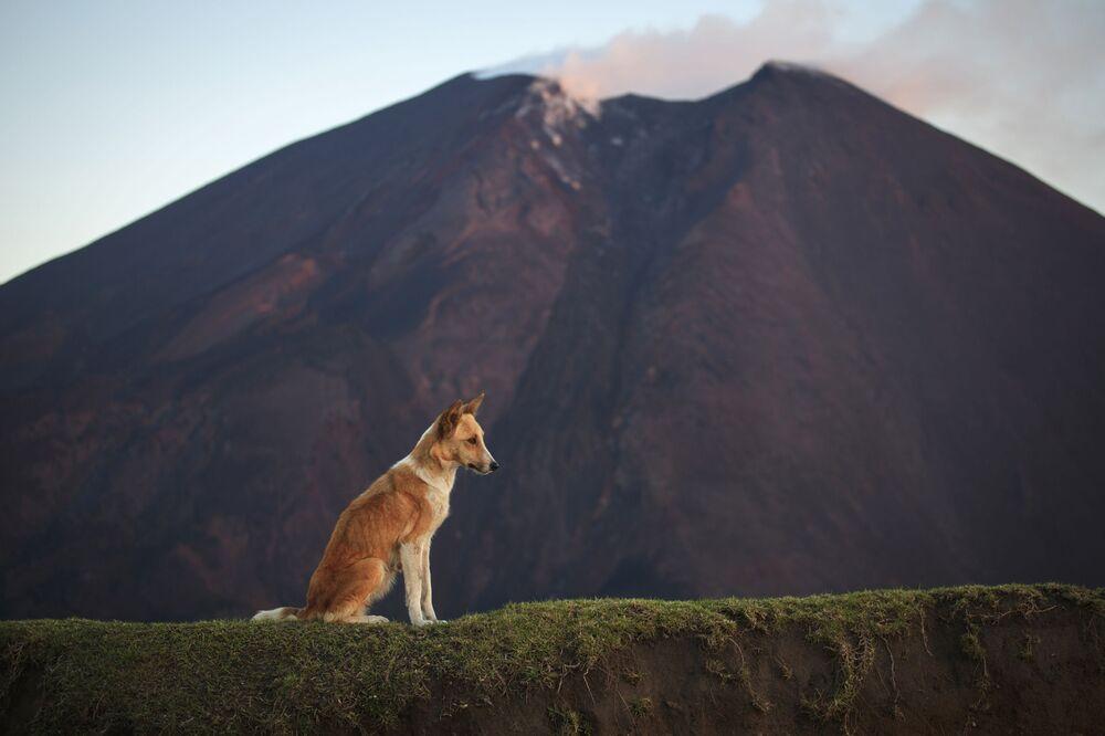 O vulcão Pacaya na Guatemala continua em ação e é um dos mais ativos no mundo, ficando a uma altura de 2.552 m. No fim da trilha, os visitantes costumam assar marshmellows sobre lava ardente.