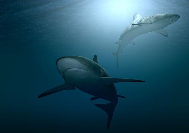 Dois tubarões (imagem referencial)
