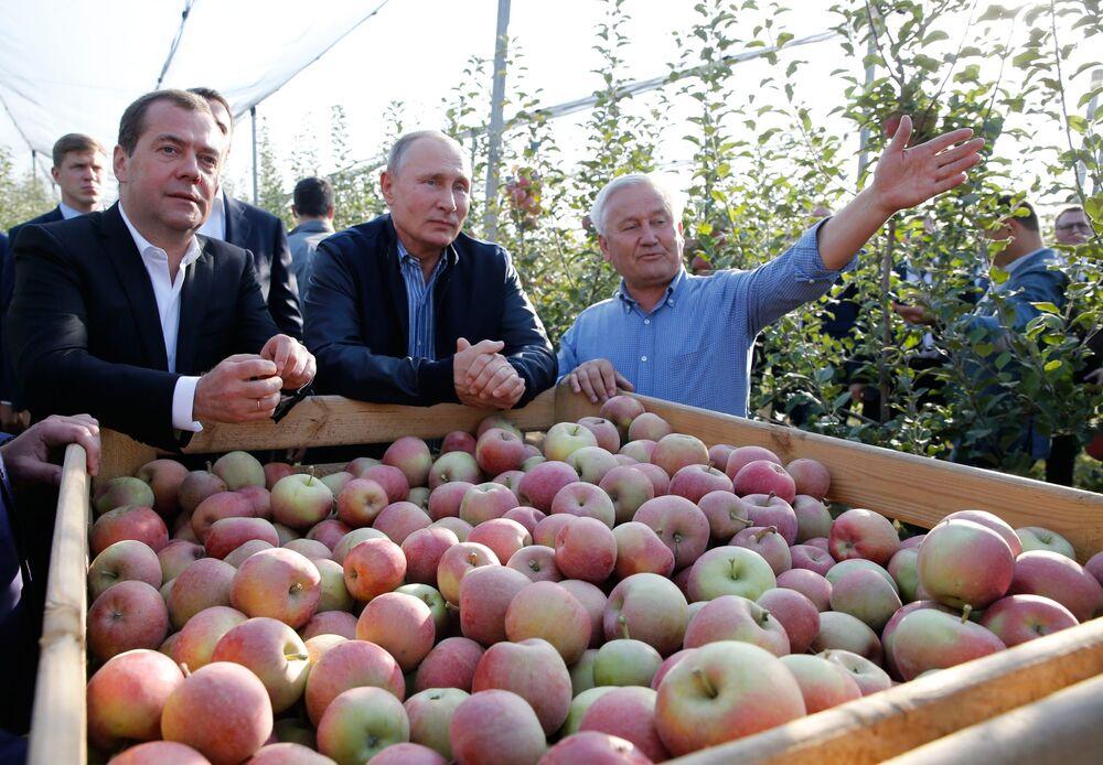 Presidente russo Vladimir Putin e premiê Dmitry Medvedev inspecionam granja produtora de frutas na região de Stavropol