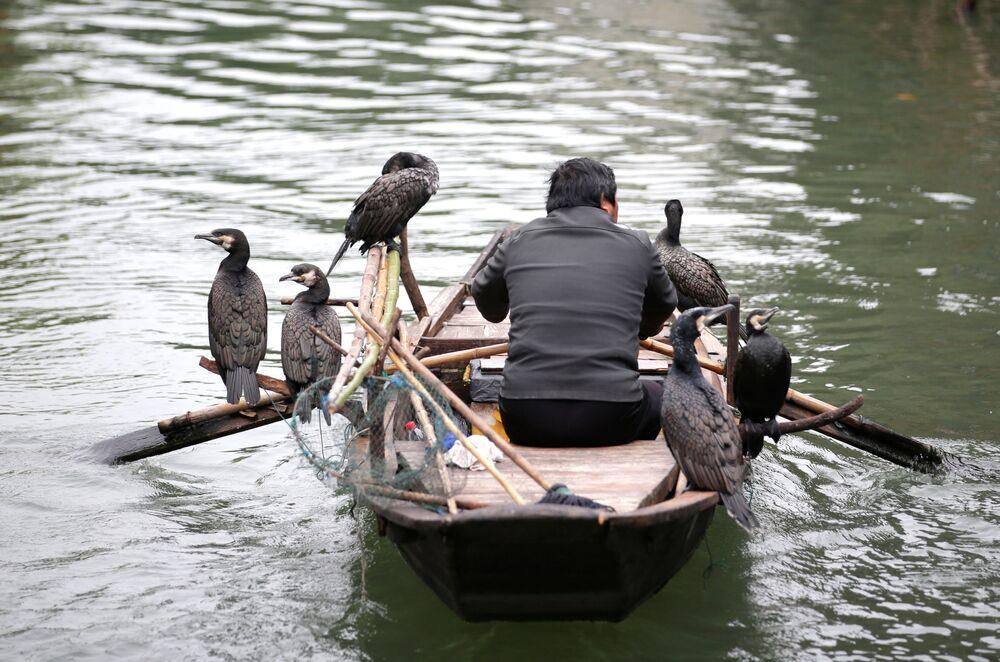 Pescador em um barco junto com aves treinadas para caçar peixe, na China