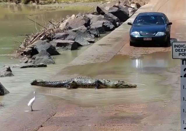 Crocodilo atravessa pista no Parque Nacional Kakadu, na Austrália