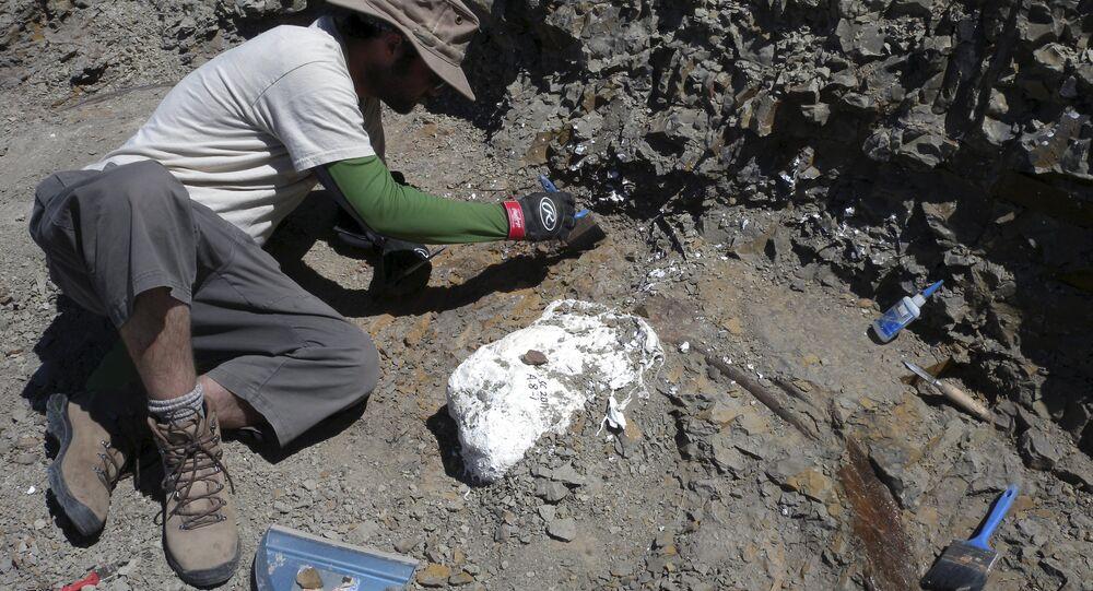 Equipe de campo durante escavações contendo o dinossauro Wendiceratops pinhornenis em Manyberries, Alberta, Canadá (imagem referencial)