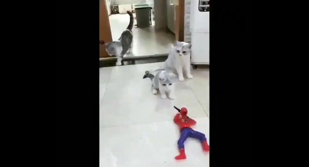 Gatos entram em confronto com militar de brinquedo