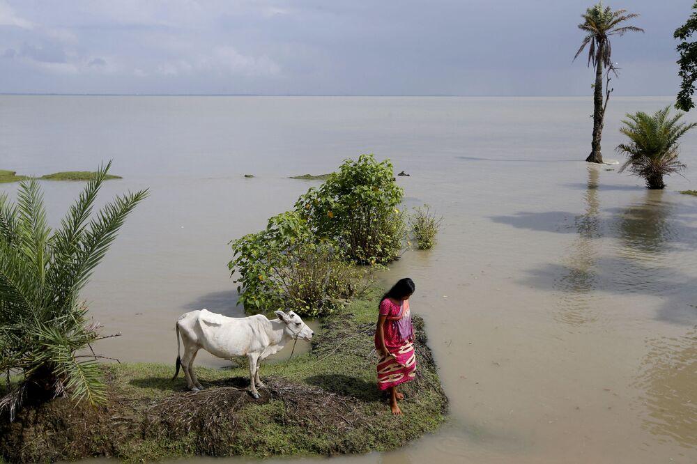 Mulher prende sua vaca em um lugar mais alto durante a maré alta na ilha.