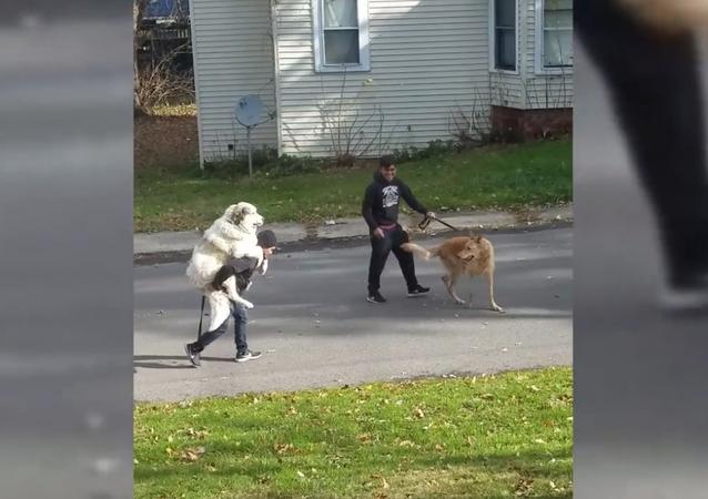 Homem carrega cão nas costas durante passeio