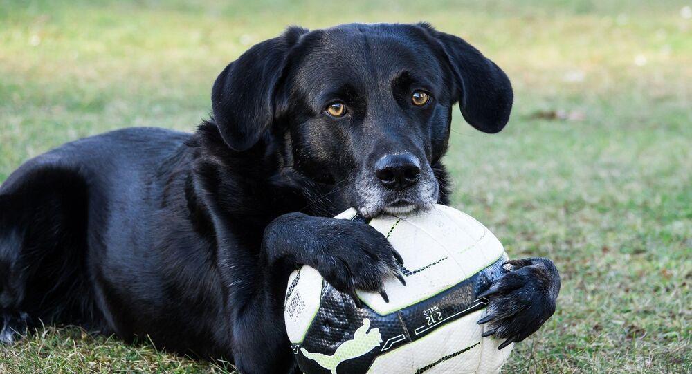 Cachorro com bola