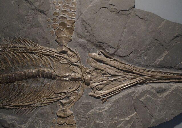 Fóssil de um ictiossauro (imagem ilustrativa)