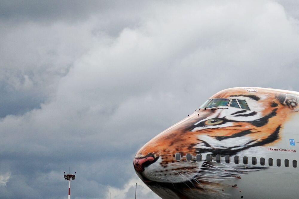 O Boeing 747-400 da empresa russa Rossiya com cara de tigre pintada na parte frontal do veículo