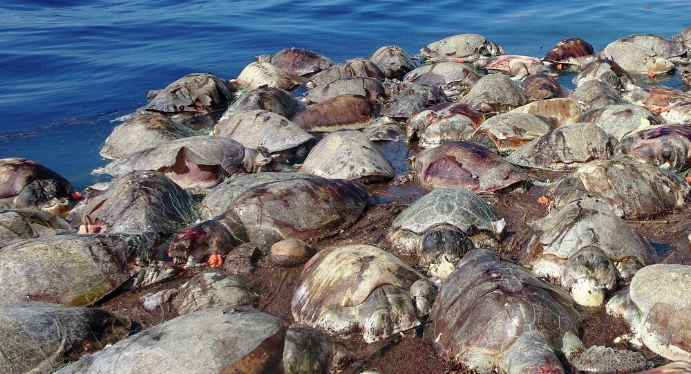 Tartarugas mortas flutuam no mar, próximo a Puerto Escondido, no México. Cerca de 300 tartarugas marinhas morreram no costa mexicana do pacífica após ficarem presas em uma rede de pescaria ilegal abandonada.