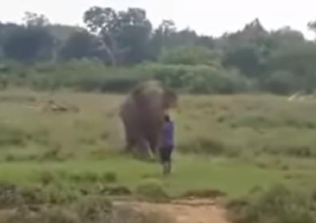 Homem morre pisoteado ao tentar hipnotizar elefante (IMAGENS FORTES)