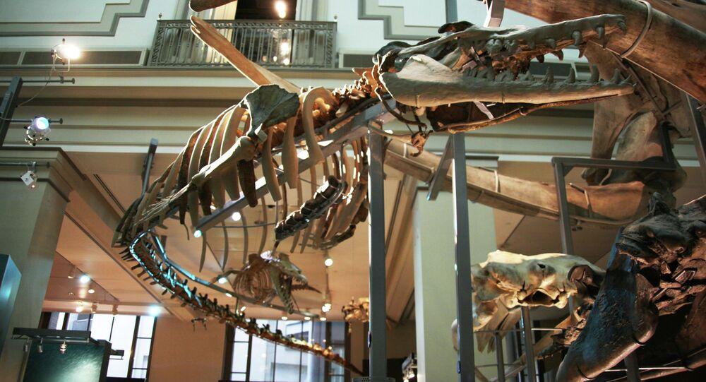 Extinta baleia da espécie Basilosaurus Isis