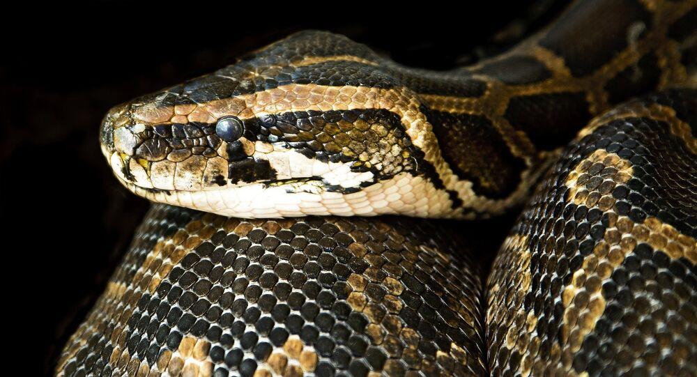Serpente (imagem referencial)
