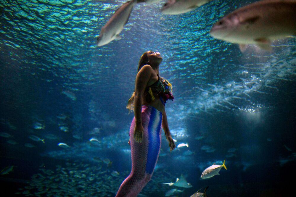 Estudante brasileira de Biologia Marinha Isabela Cardoso, de 21 anos, nada como sereia no aquário do Rio de Janeiro (AquaRio) para chamar atenção para a contaminação dos oceanos
