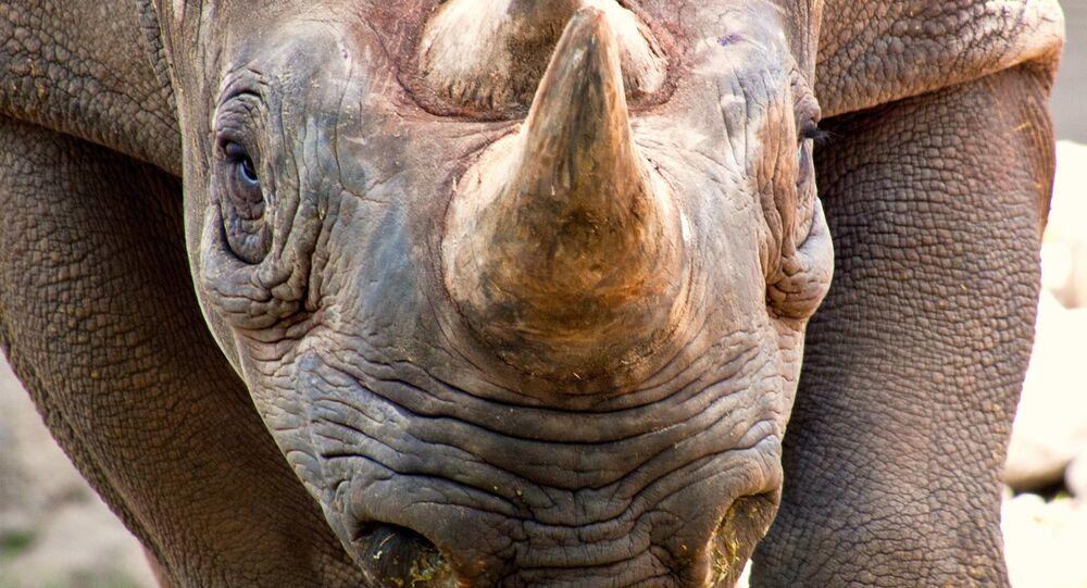 Rinoceronte (imagem referencial)