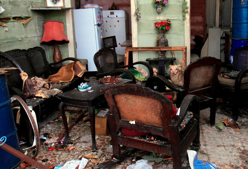 Cachorro sentado em uma poltrona de casa destruída em resultado do tornado em Havana