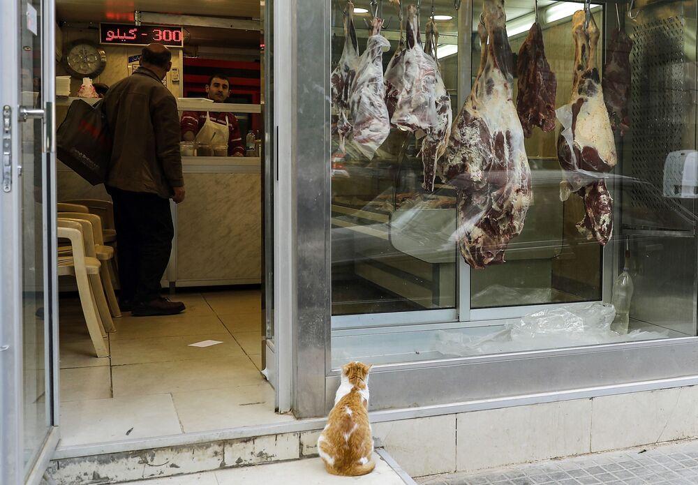 Gato faminto olha para vitrina do açougue em Beirute, Líbano