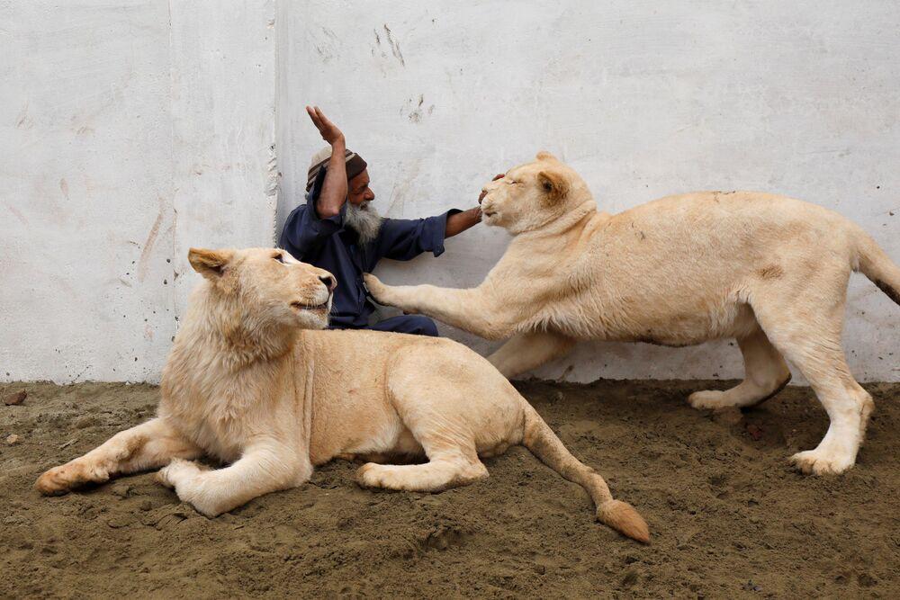 Zelador brinca com leões de estimação dentro de recinto, na cidade de Peshawar, Paquistão, 4 de fevereiro de 2019