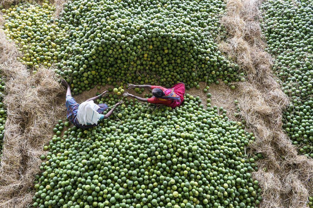 Trabalhadores indianos selecionam frutas, chamadas de laranjas doces nos arredores de Hyderabad, Índia, em 11 de fevereiro de 2019