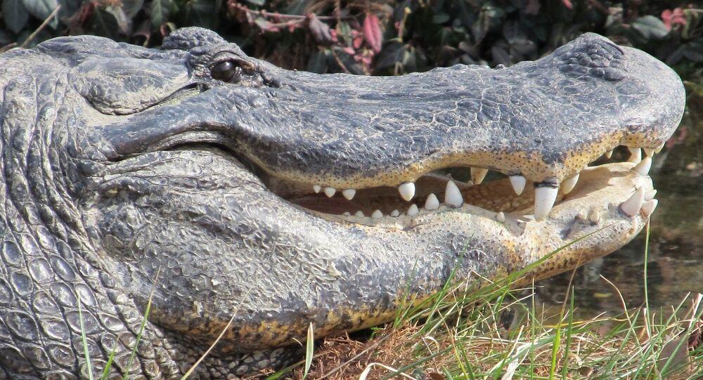 Crocodilo (imagem de arquivo)