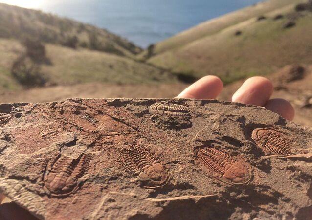 Trilobita em rocha Câmbrica