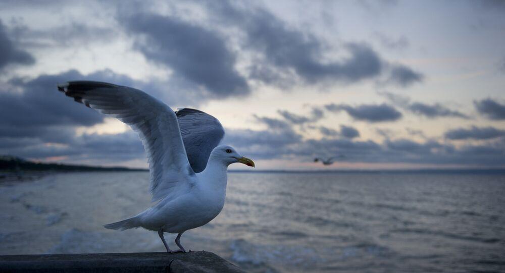 Uma gaivota na parte alemã do mar Báltico