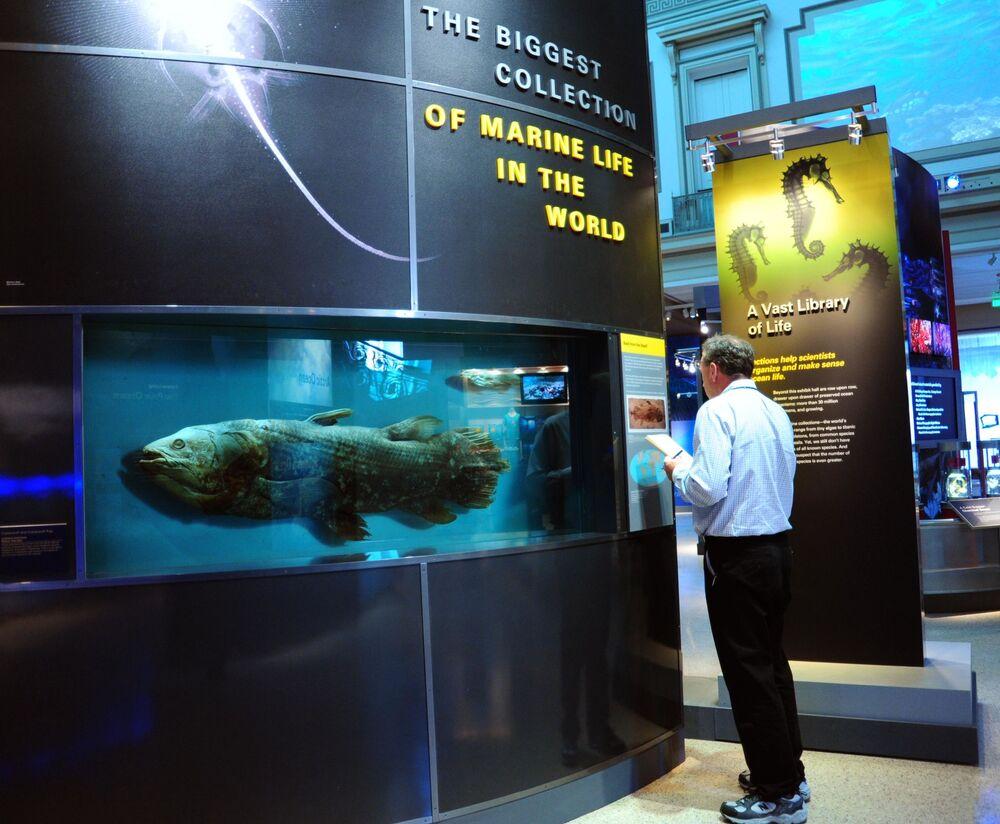 Um exemplar de peixe da ordem Coelacanthiformes representado no Museu Nacional de História Natural em Washington