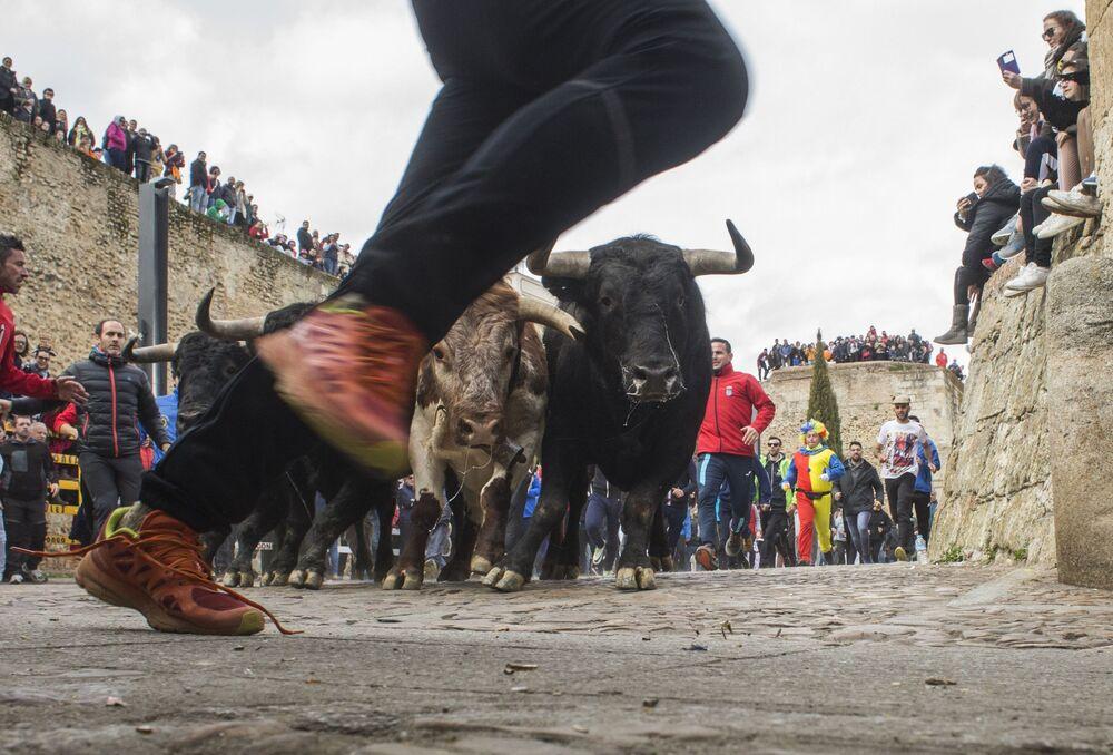 Pessoas correm de touros pelas ruas durante o Carnaval Del Toro, em Ciudad Rodrigo, Espanha