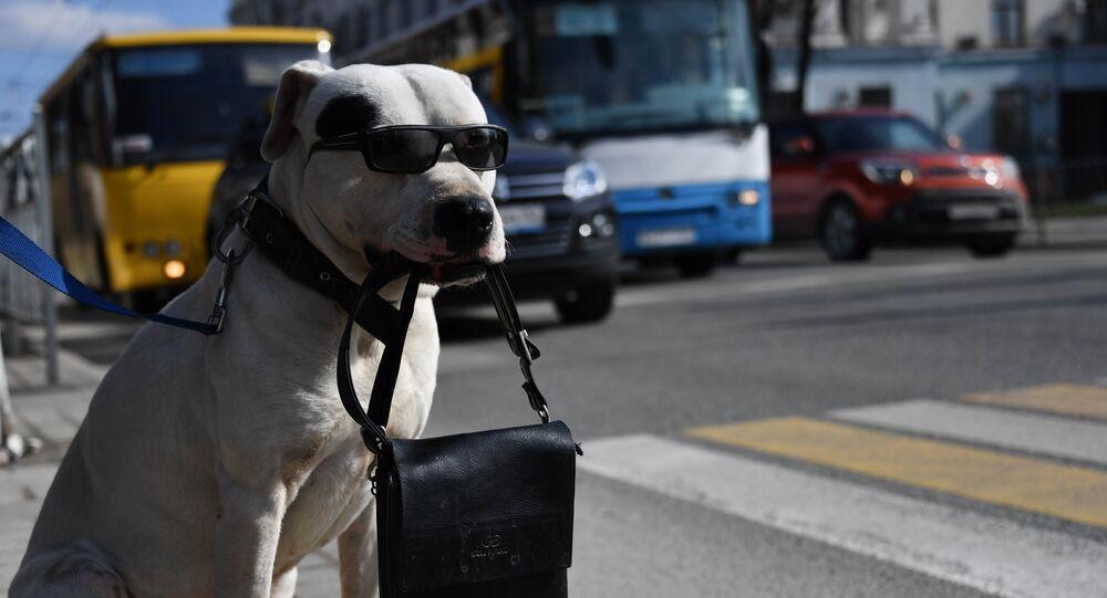 Cachorro em uma das ruas de Simferopol, Crimeia, Rússia