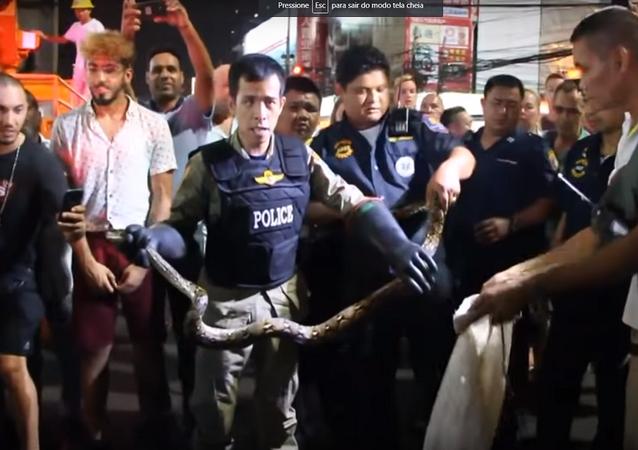 Píton pendurada em poste de eletricidade aterroriza turistas em rua tailandesa