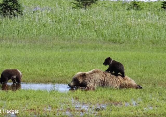 Ursinhos atrapalham o sono da mamãe