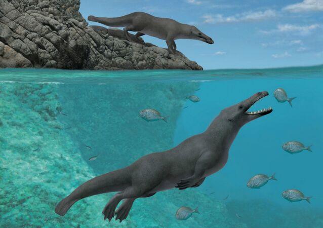 Peregocetus pacificus, nova Protocetidae descoberta em depósitos marinhos (imagem ilustrativa)