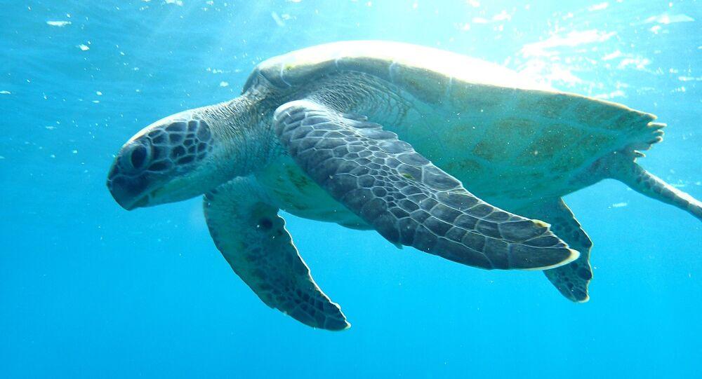 Tartaruga no oceano (imagem ilustrativa)