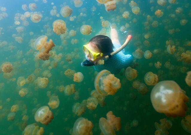 Mergulhadora nada com águas-vivas douradas em Palau