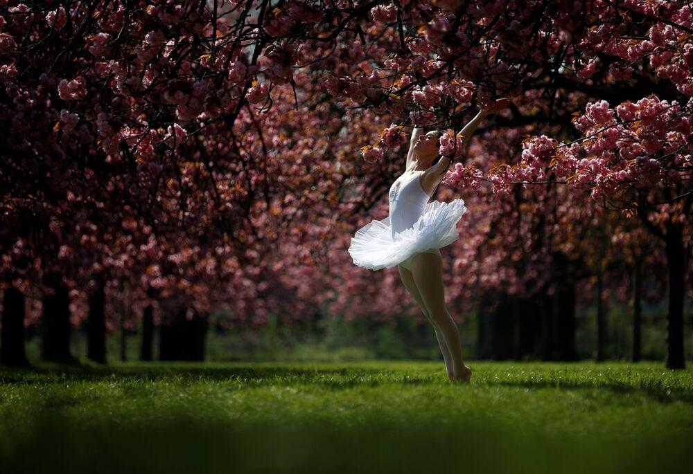 Bailarina posando para fotografia sob cerejeiras em flor perto de Paris, França