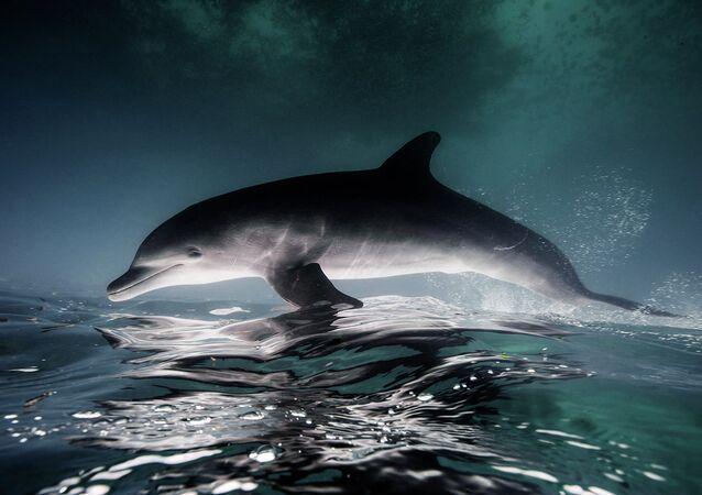 Fotografia subaquática de golfinho no México (imagem referencial)