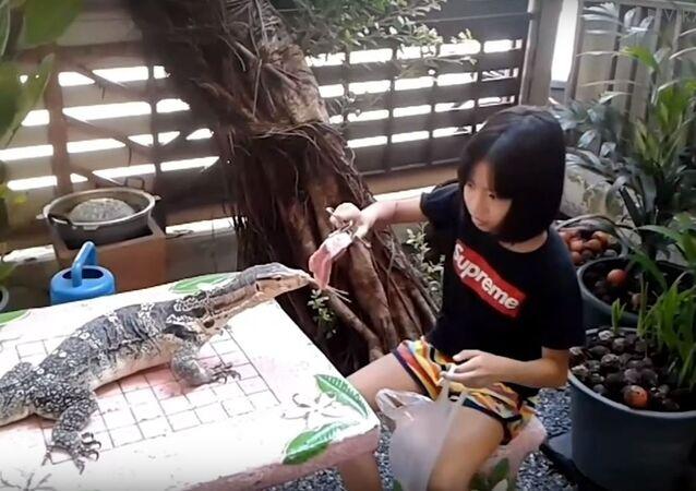 Garota alimenta lagarto gigante com carne crua