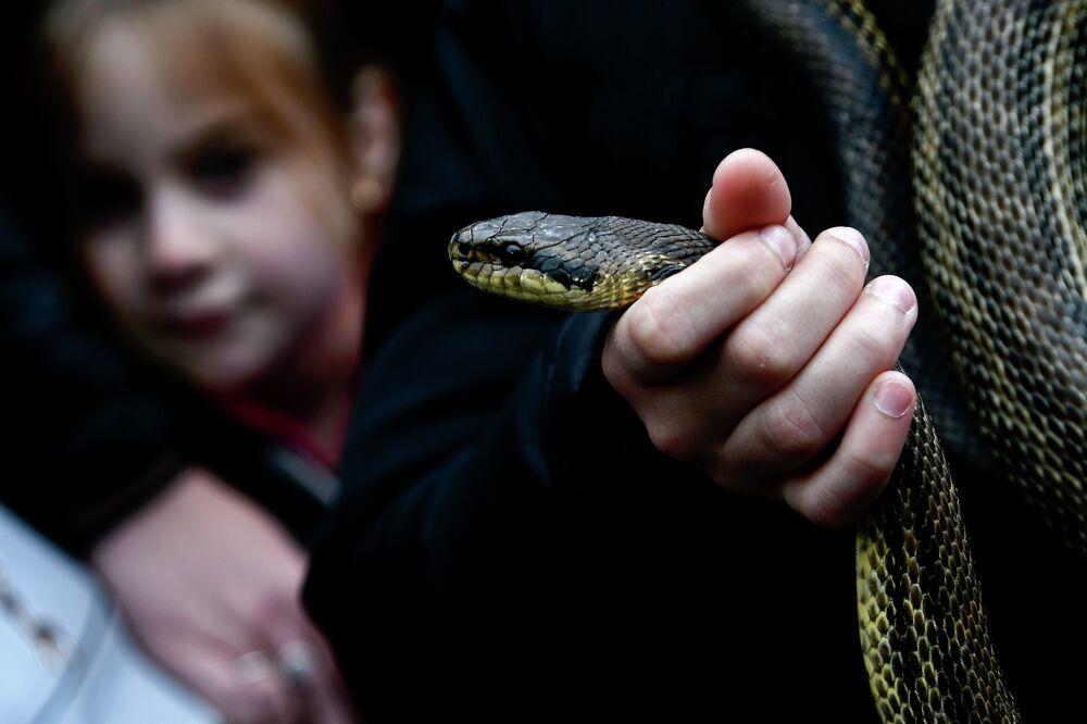 Pessoa com uma cobra na mão no decorrer da procissão anual nas ruas da vila italiana de Cocullo