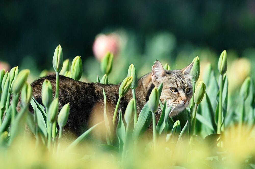 Um gato no jardim botânico de Nikitsky, na Crimeia