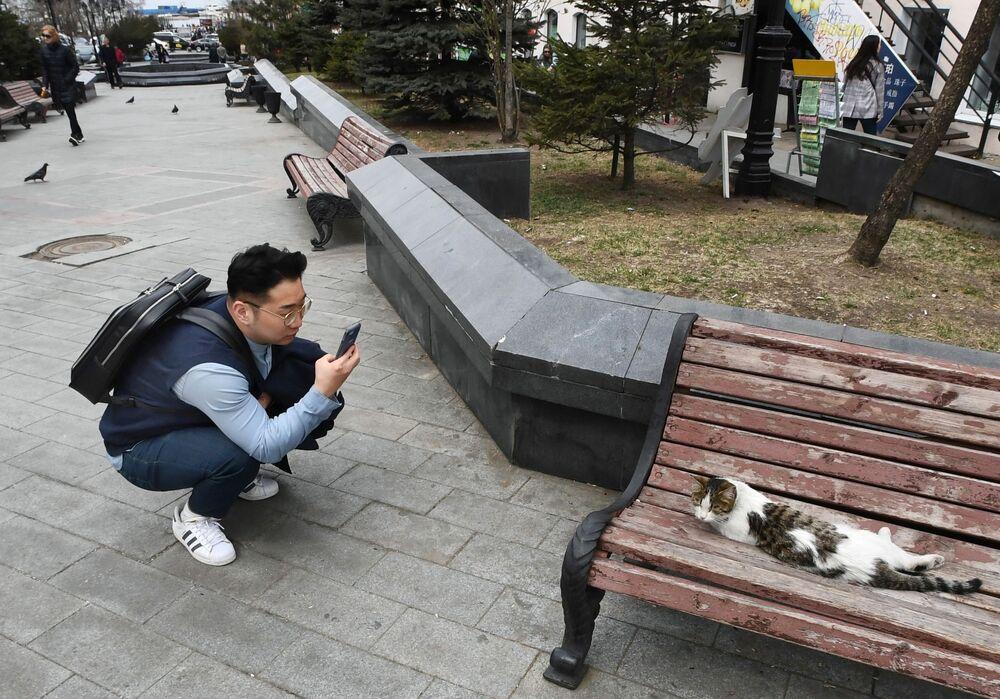 Turista tira foto de um gato em uma das ruas da cidade russa de Vladivostok