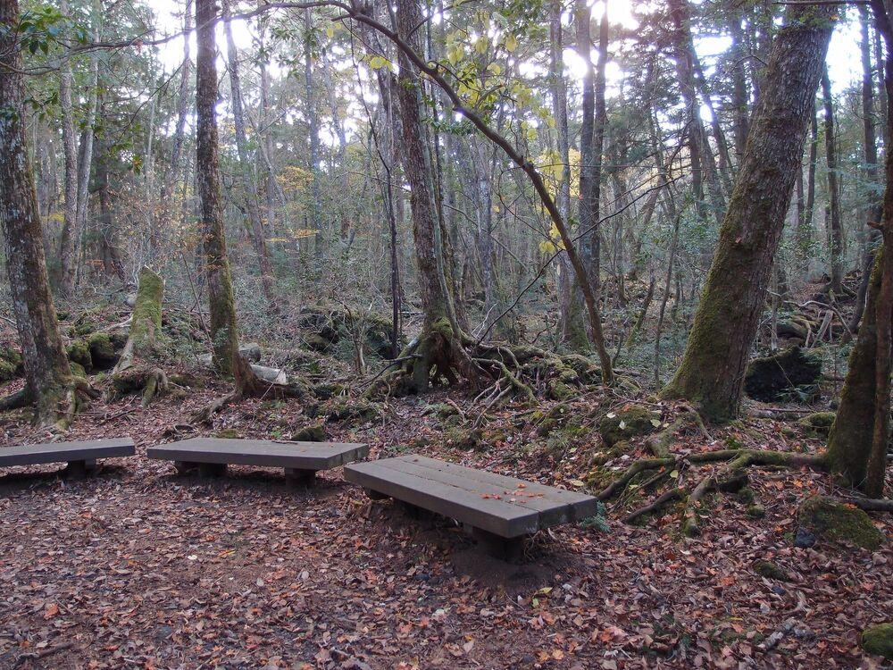 Floresta de Aokigahara, conhecida como Floresta dos Suicidas, é um bosque de 38km² situado na base noroeste do monte Fuji, no Japão, considerado amaldiçoado por séculos