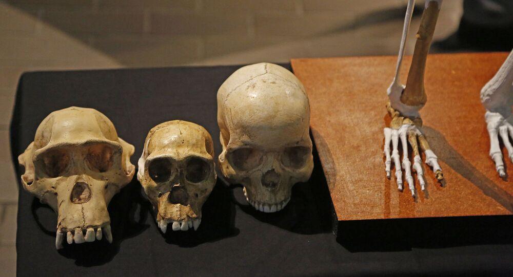 Réplicas de crânios são exibidas ao lado de réplica da primeira espécie humana, no Museu Iziko, na cidade de Cape Town, África do Sul, 15 de maio de 2014
