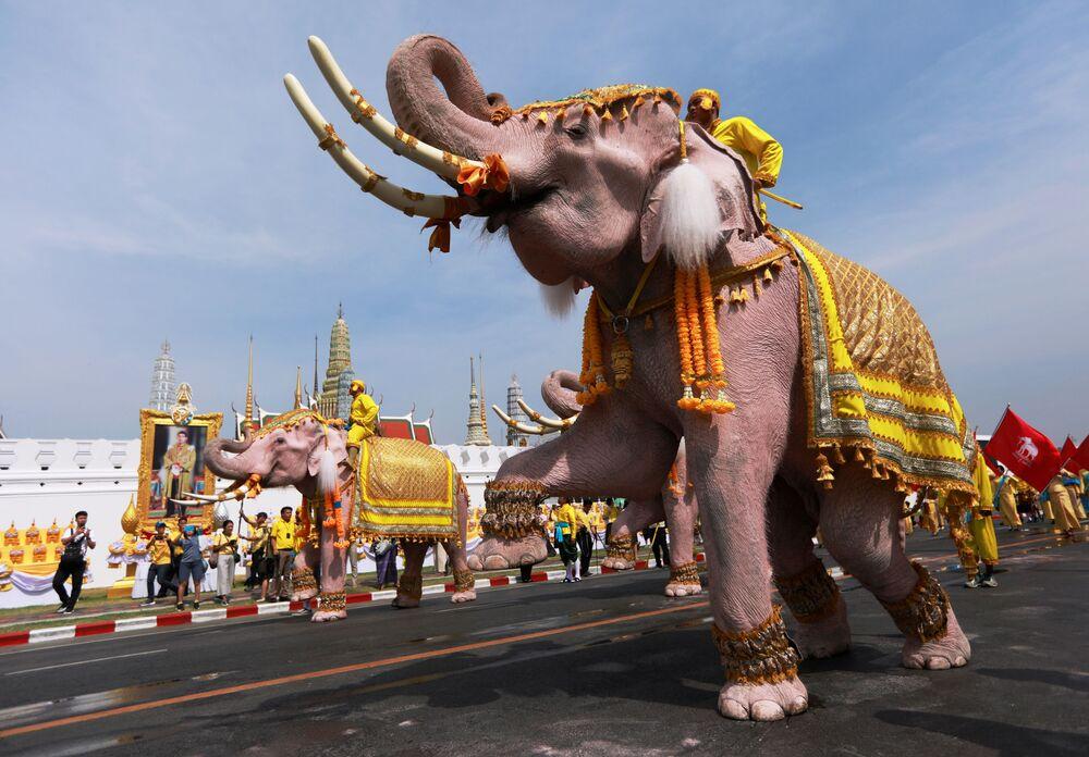 Elefantes participam da cerimônia de coroação do novo rei tailandês Maha Vajiralongkorn