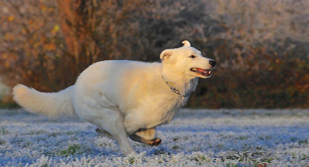 Cão (imagem referencial)